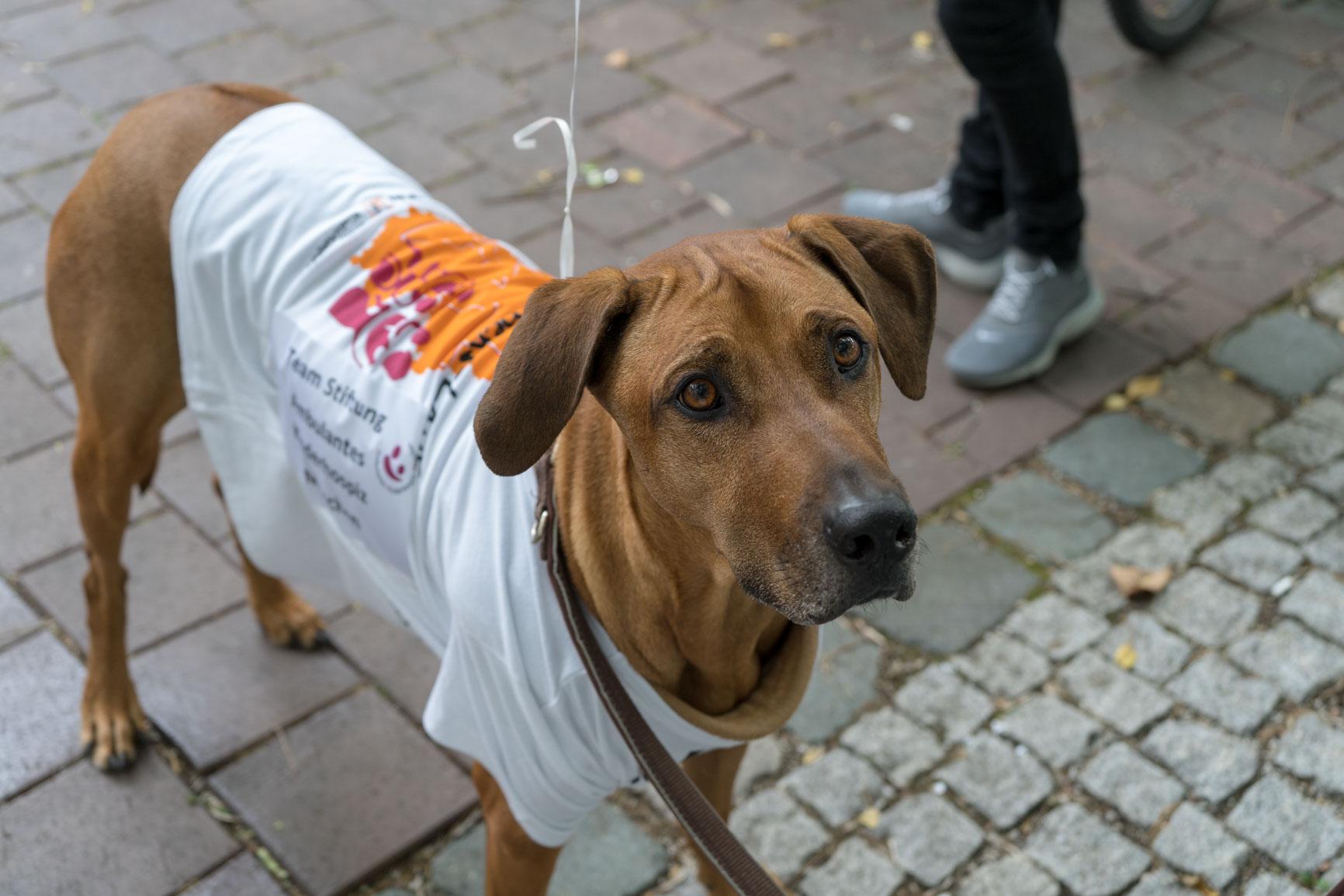 © Stiftung Ambulantes Kinderhospiz München - Kinder-Lebens-Lauf-2018