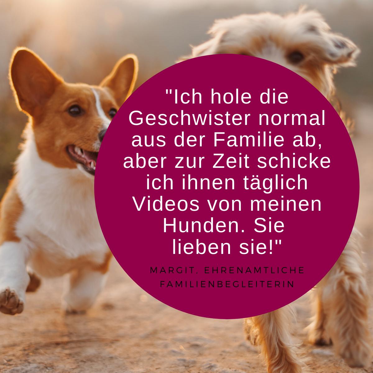Zitat Ehrenamt und Bild Hunde