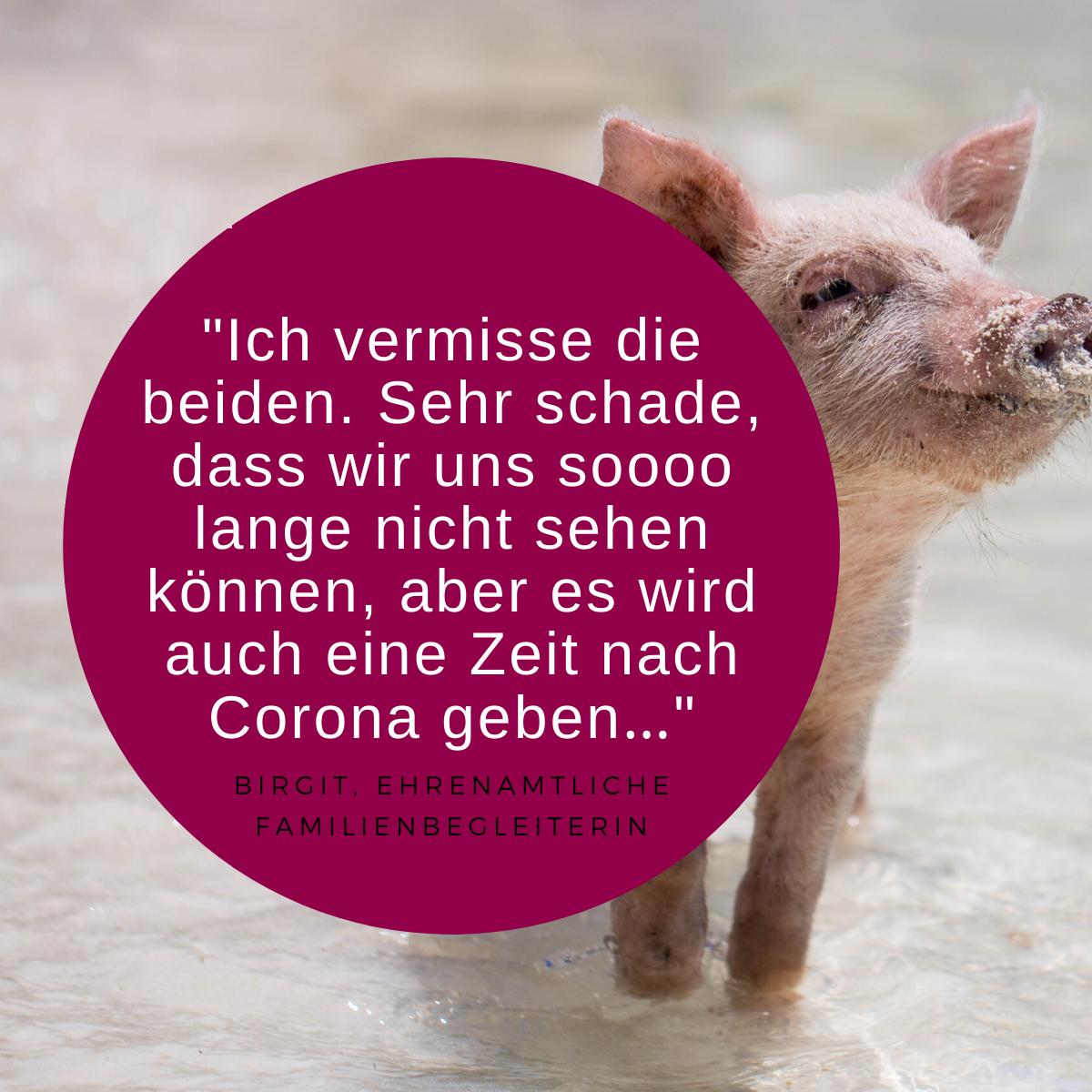 Zitat Ehrenamt und Bild Schwein