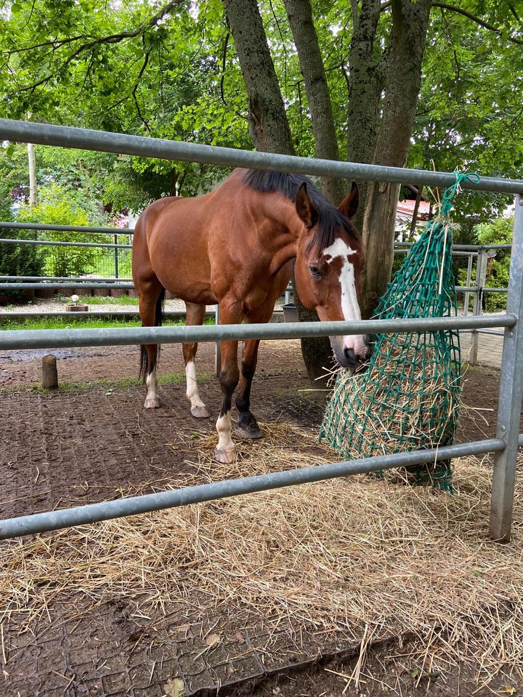 Pferd Erlebnispädagogisches Angebot