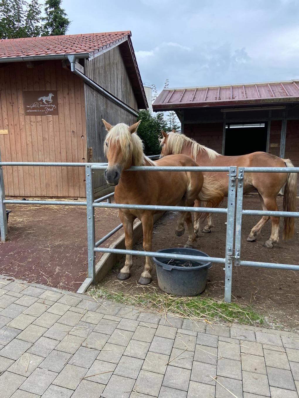 Pferde Erlebnispädagogisches Angebot